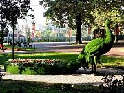 Изготовление и продажа скульптур топиарий по всей Украине. Москва