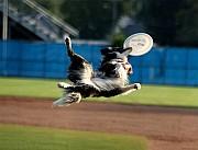 Фрисби - Диск летающий для собак или для детских игр Донецк