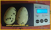 Яйцо инкубационные перепела Фараон (Espana). Москва