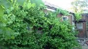 Продам дом Ясиноватая