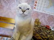 Голубоглазая красавица ищет свой дом Луганск