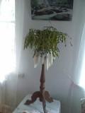 Напольные подставки под цветы Харцызск