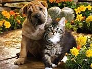 Ветеринарная помощь на дому Санкт-Петербург